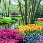 Garden Vibrant Free morguefile.com