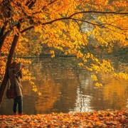 fall-great-unsplash-free-photo-1414788101029-46aec67101ca-180x180